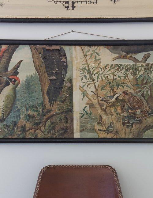 Vintage Botanical Bird Print Poster