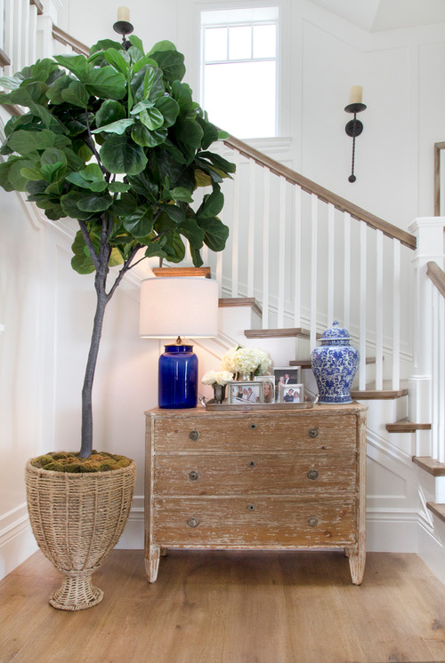 Fiddle Leaf Fig in the Entryway