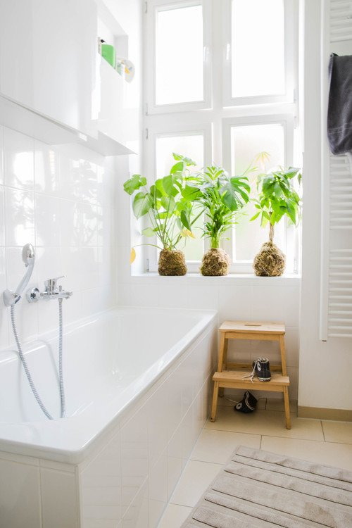 White Contemporary Bathroom with Houseplants