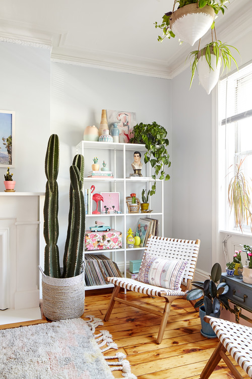 Cactus in a Living Room