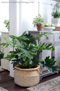 Why You Need Healthy Houseplants in Your Life