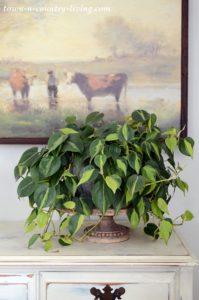 Easy Houseplants Create Cozy Spring Living