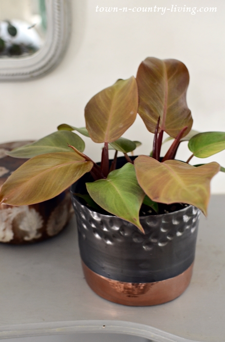 Prince of Orange Philodendron in Designer Garden Pot
