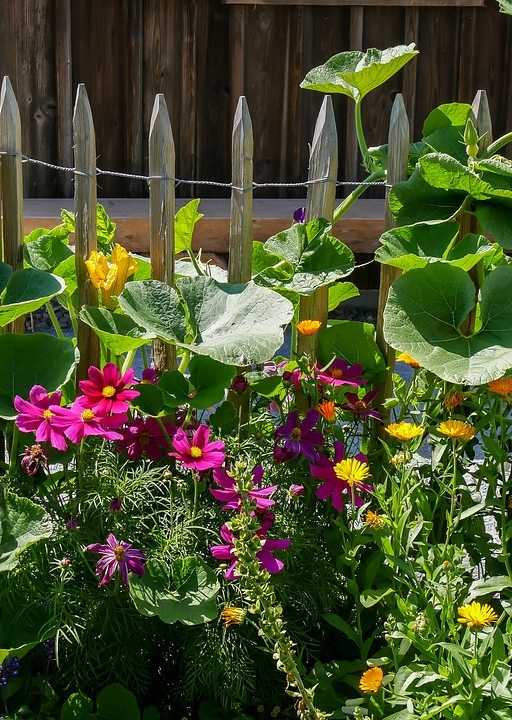 Cottage Garden with Cosmos and a Picket Fence