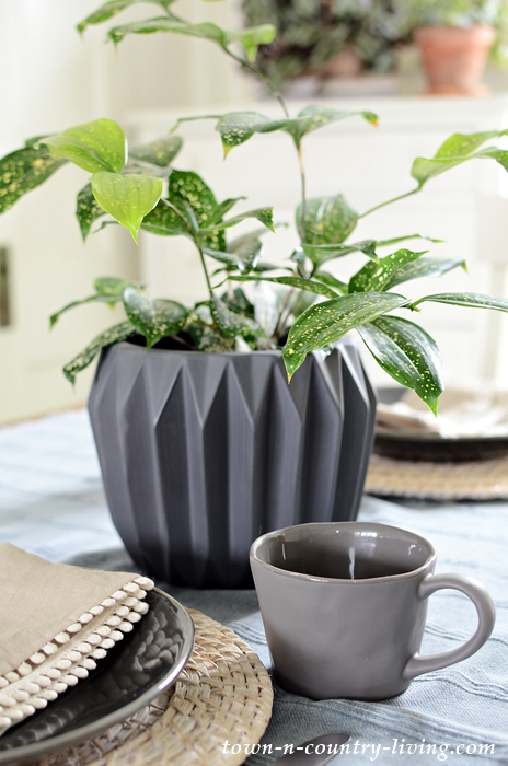 Draceana Florida Beauty in Gray Garden Pot