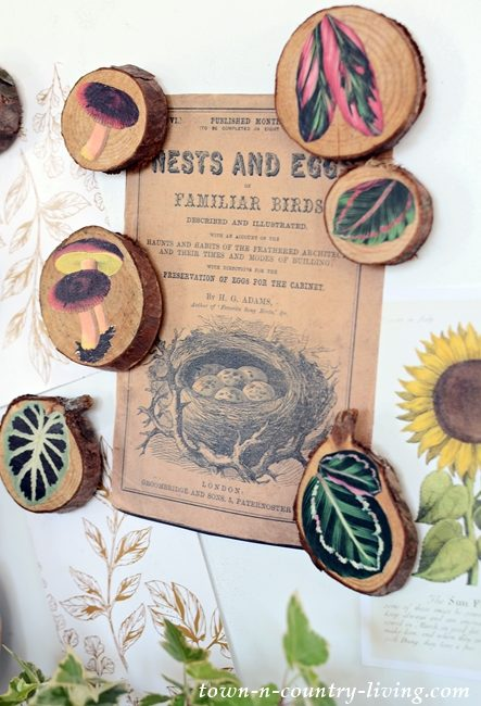 Nature Inspired Wood Slice Magnets