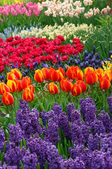 Spring Bulb Garden Idea with Tulips and Hyacinths