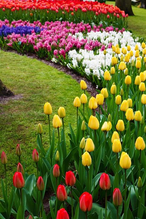 Inspiring Tulip Garden Ideas Town Amp Country Living