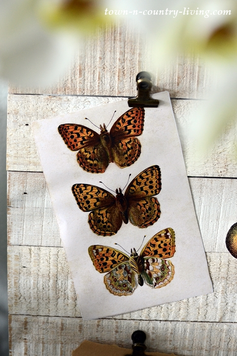 Vintage Butterfly Trio Print