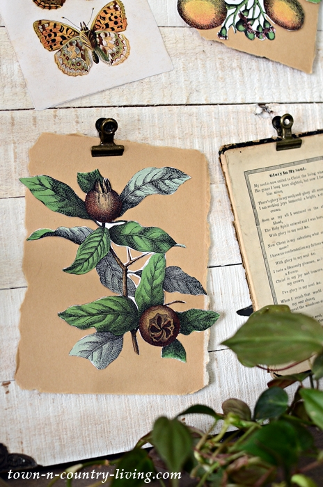 Vintage Botanical for Scrapbooking