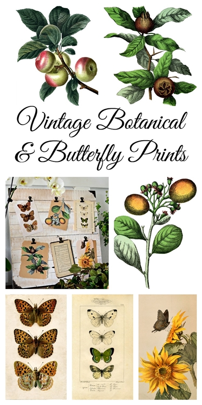 Create a Nature Board with Free Printables