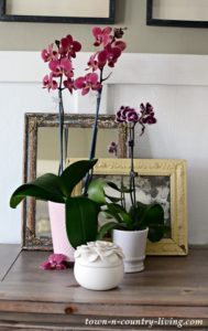 Yes, You Too Can Grow Orchids!