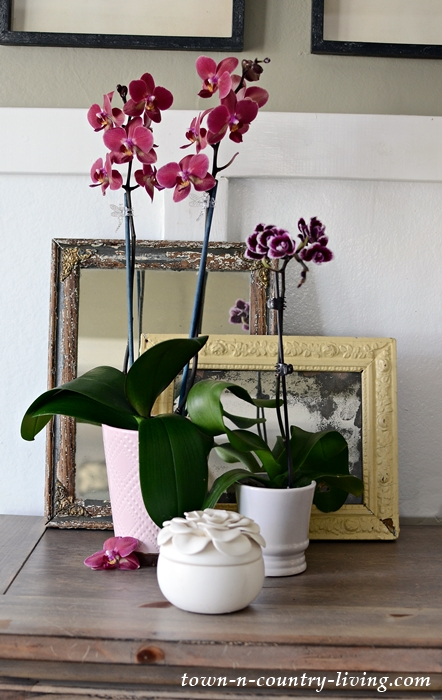 Tips for Growing Orchids Indoors