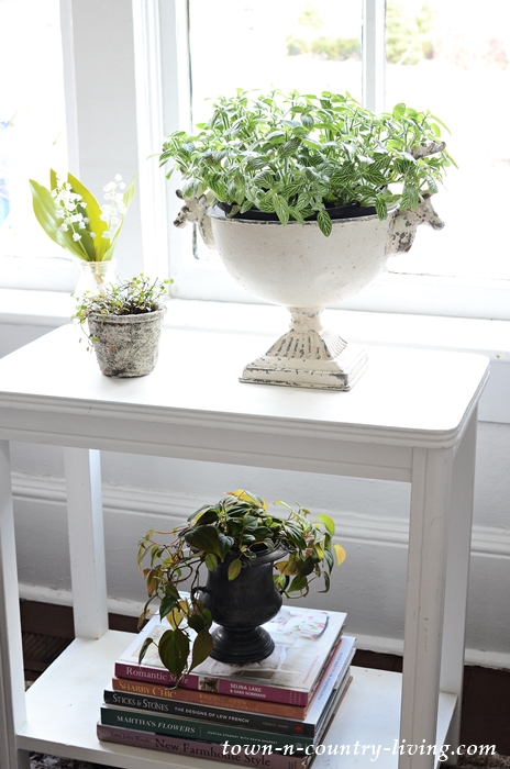 Plant Table with Zebra Plant and Micans Philodendron