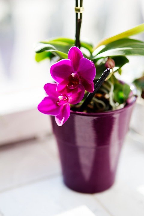 Pink/Purple Orchid in Small Ceramic Pot
