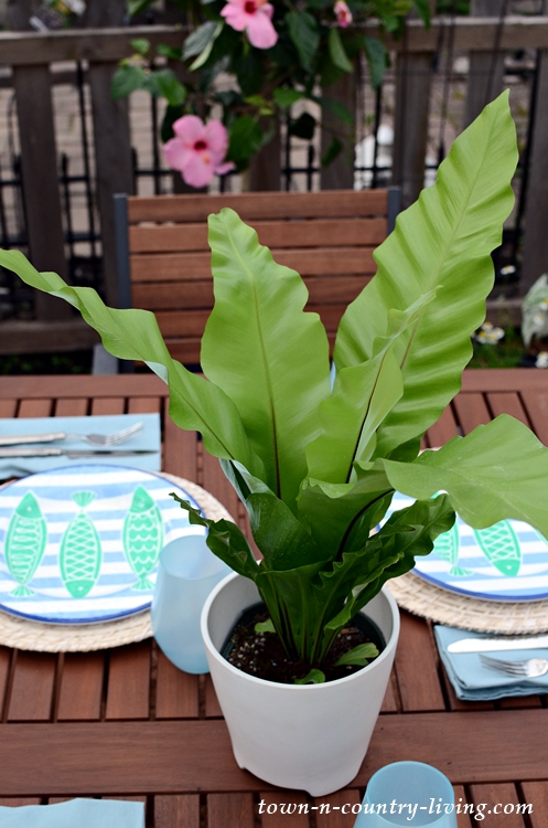 Use a Single Plant for an Outdoor Centerpiece