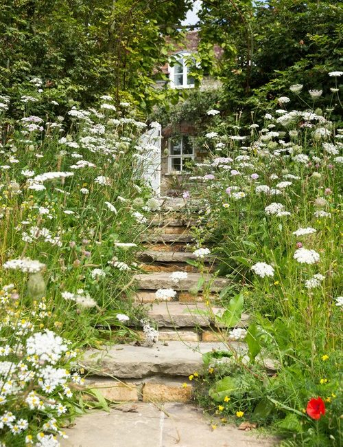 Cow Parsley Framing Stone Steps