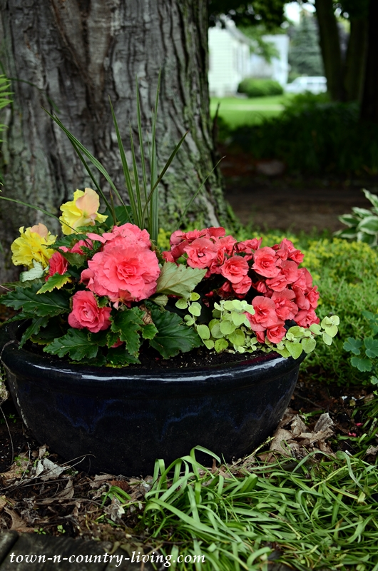 Container Garden with Tuberous Begonias