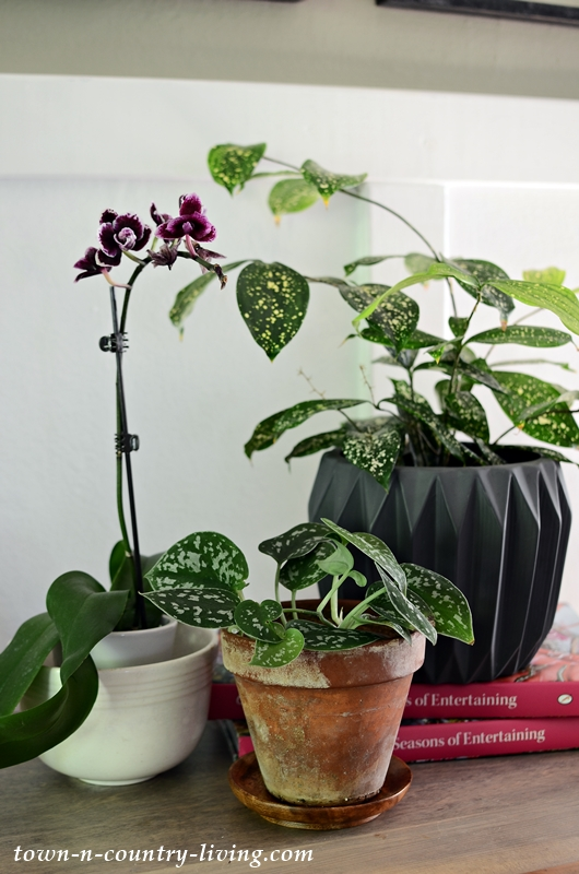 Houseplants and Orchids
