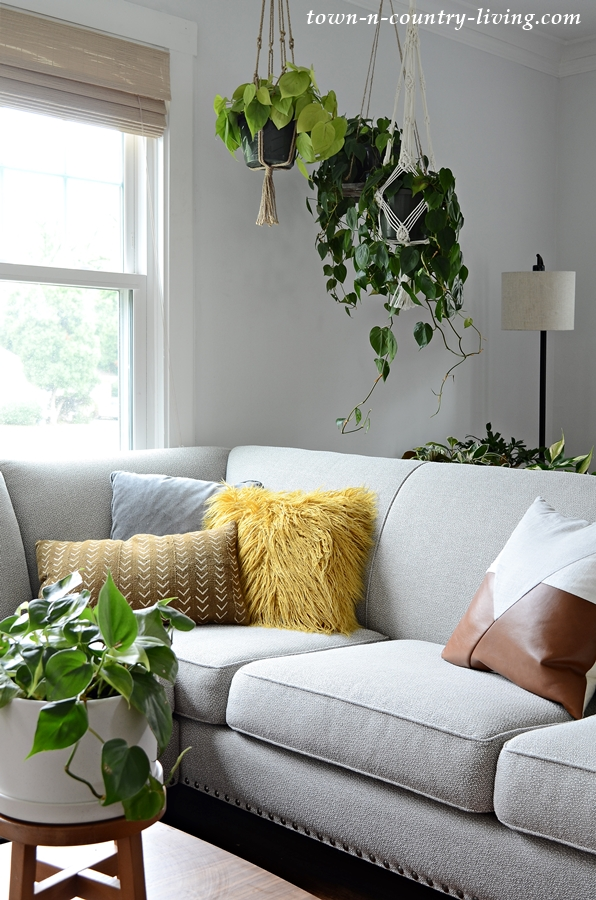 Hanging Philodendron Plants above Sofa