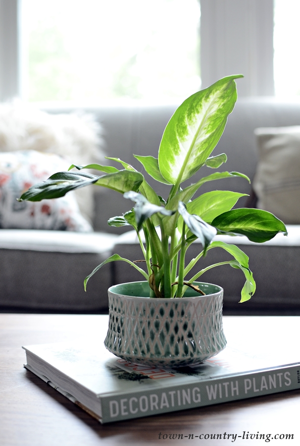 Houseplant on Coffee Table