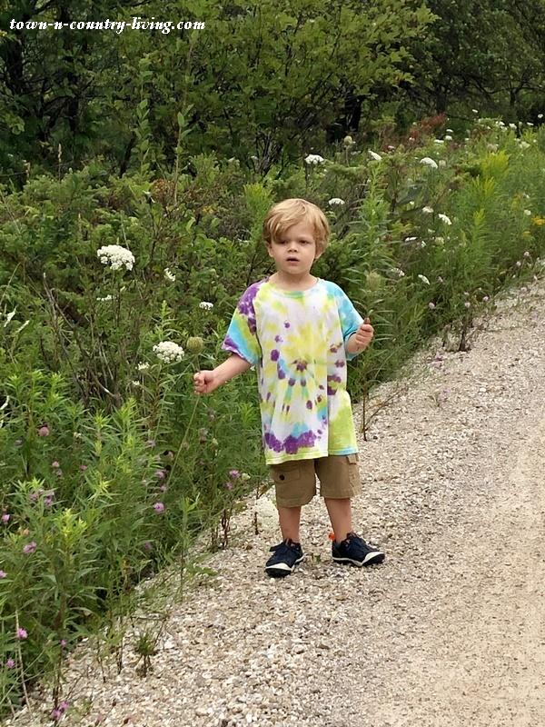 Wisconsin Wildflowers