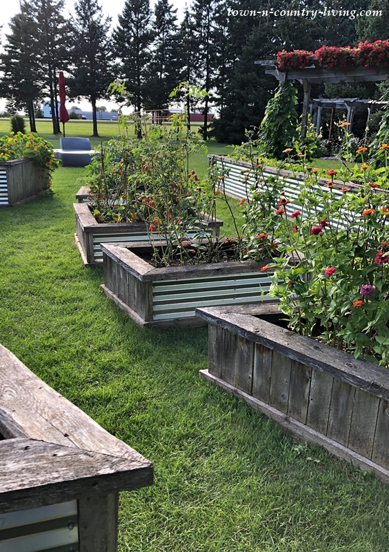 Wood and Corrugated Metal Raised Garden Beds