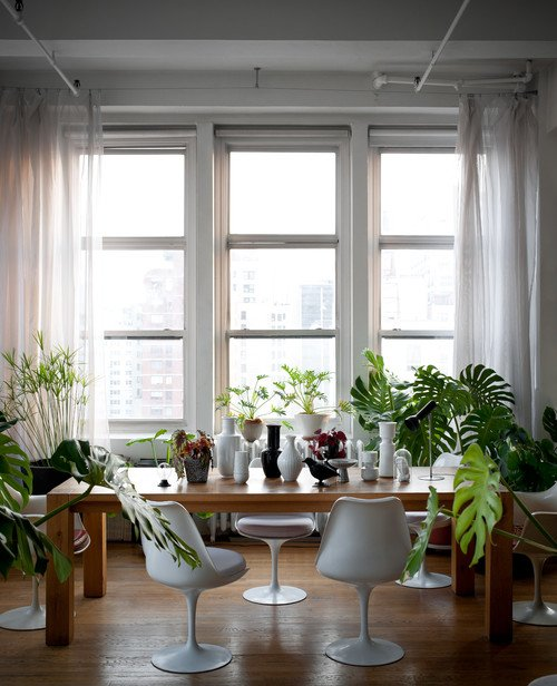 Plant Filled Dining Room