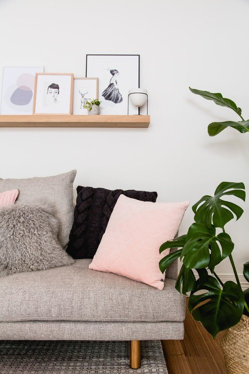 Scandinavian Style Living Room with Swiss Cheese Plant