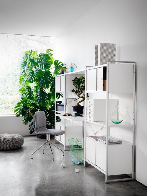 Large Monstera in Light-Filled Home Office