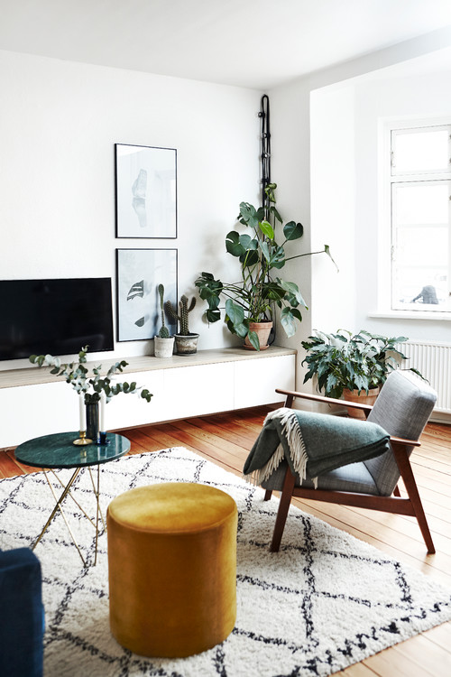 Swiss Cheese Plant, Monstera, in Mid Century Modern Living Room