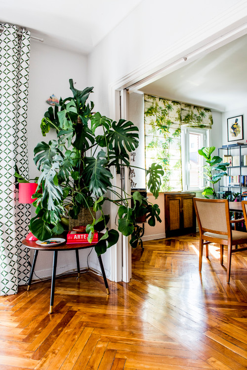 Extra Large Monstera Plant as Home Decor