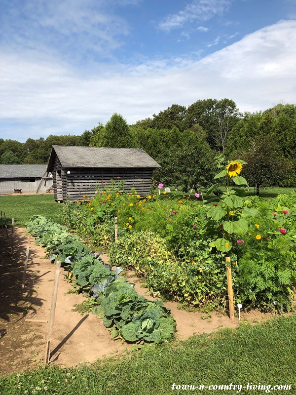 Country Garden with Heirloom Flowers and Vegetables