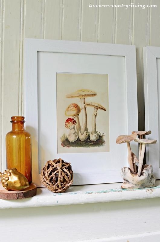 Framed Vintage Style Mushroom Print