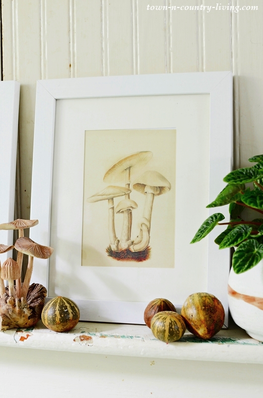 Free Mushroom Printables