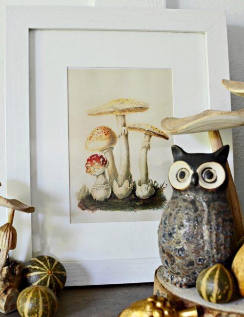 DIY Framed Mushroom Print