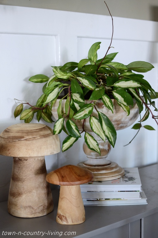 Hoya Plant with Wooden Mushrooms