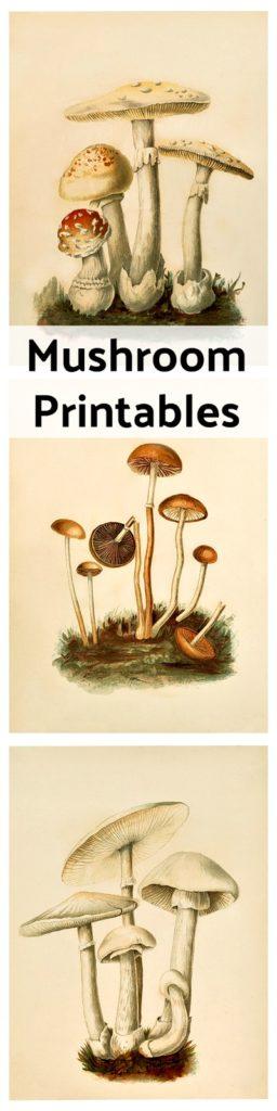 Trio of Free Mushroom Printables