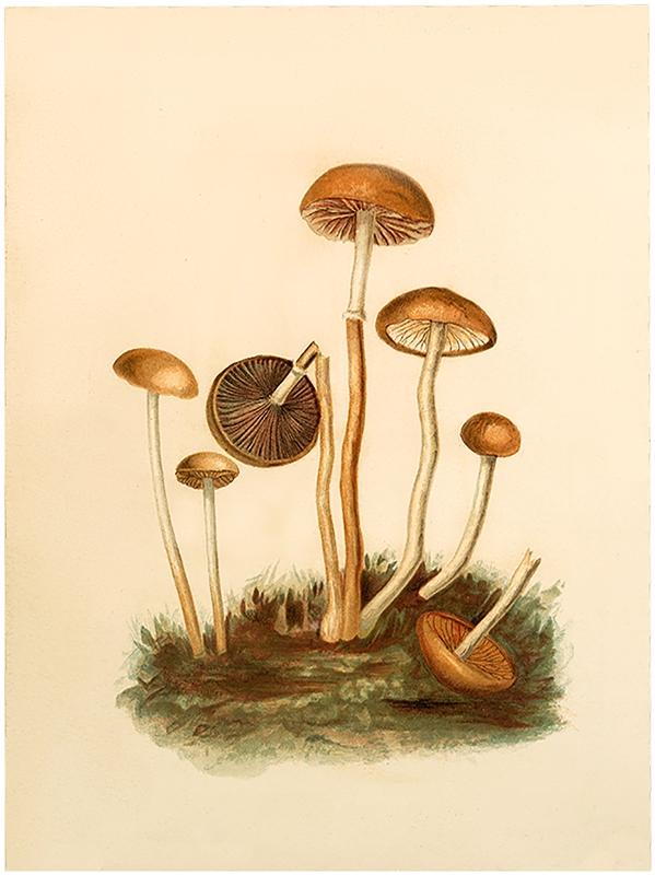 Vintage Fairy Mushrooms