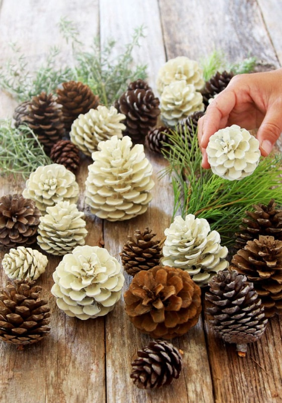 Bleached Pine Cones by A Piece of Rainbow