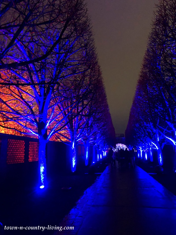 Trees Lit Up with Blue at Christmas Lightscape