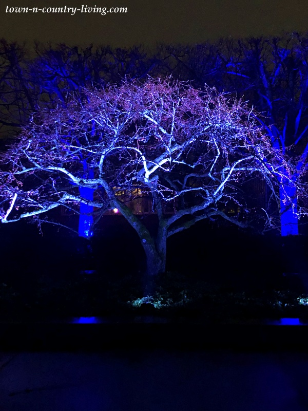 Blue Tree at Chicago Botanic Garden's Lightscape Show