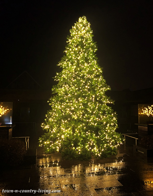 Big Christmas Tree at Chicago Botanic Garden