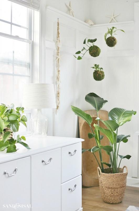 DIY Kokedama Japanese Moss Ball Planters