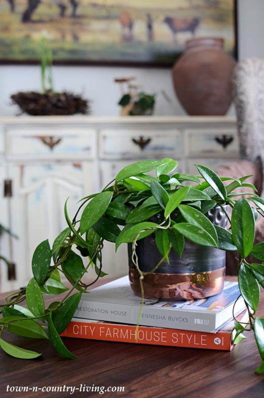Trailing Hoya Plant