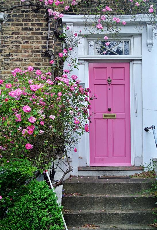 Charming Pink Front Door with Rose Vine
