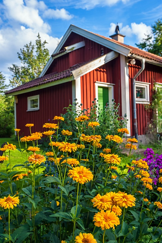 Little Red Cottage with Sunny Yellow Garden Flowers
