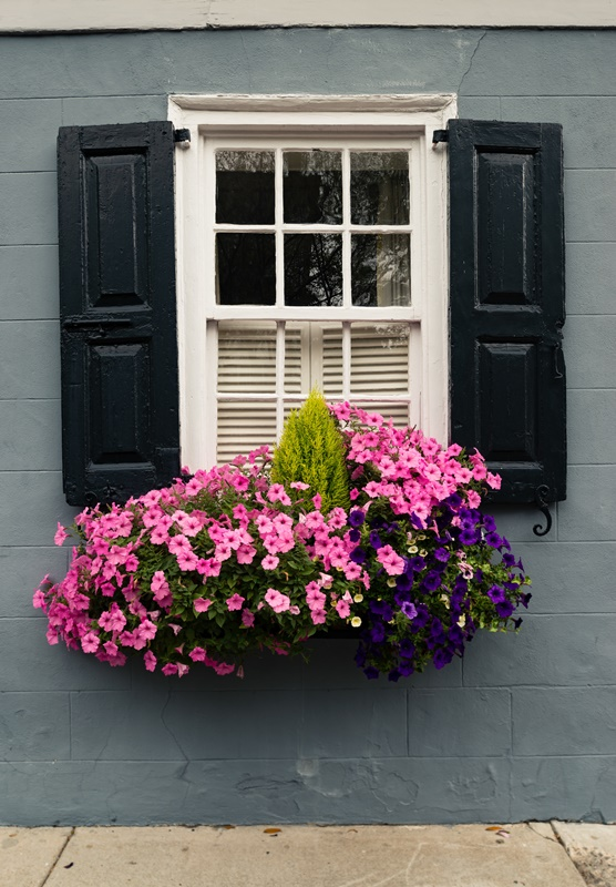 Window Box with Pink and Purple Petunias