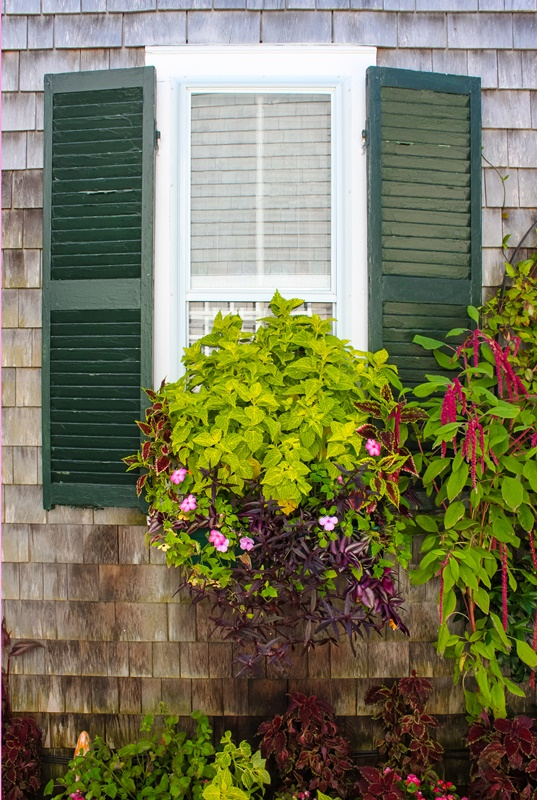Window in rustic clapboard house with green shutters with window flower box full of beautiful plants