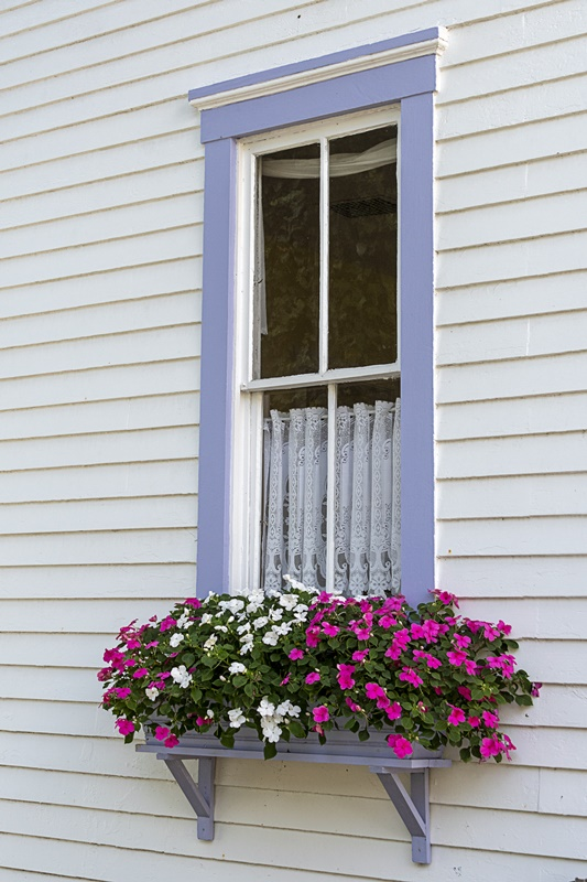 Pink and White Impatiens Under a Purple Window
